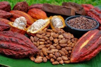 cacao_0