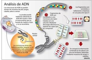 ADN Prueba [Convertido]