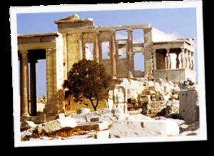 Olivo Acrópolis