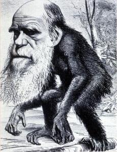 Darwin Mono