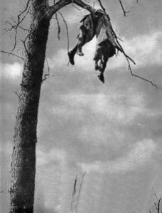 Hombre colgando de árbol PGM.