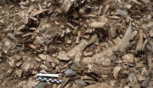 Restos de basura paleolítica cerca de Ramla, Israel. (Foto: Universidad de Haifa).