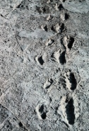laetoli_footprints