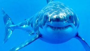 tiburones y cocodrilos